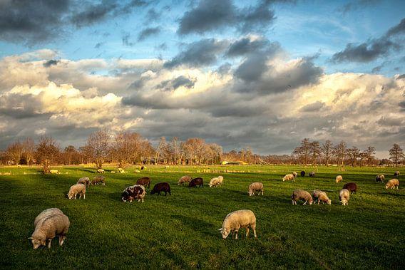 Hollands Landschap. Wolkenlucht en schapen.