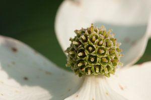 Royal flower