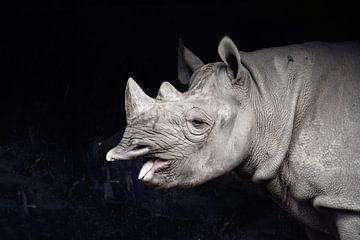 Nashorn von Esmée van Eijk