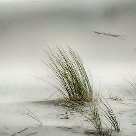 Helmgras in de duinen van Mark Bolijn