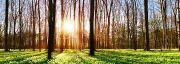 Zonsondergang in het bos van Günter Albers