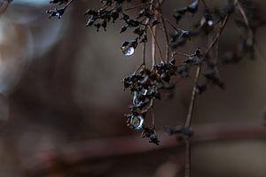 gouttes de pluie noires sur Tania Perneel
