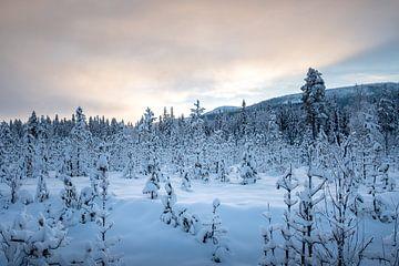 Besneeuwd landschap van Marco Lodder