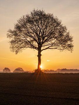 Sonnenaufgang in der Nähe eines kahlen Baumes auf dem Ackerland in Mittel-Limburg. von Karin de Jonge