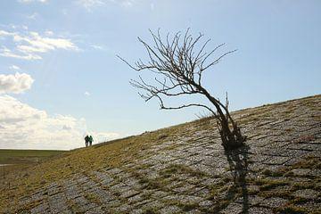 Een boom op een dijk