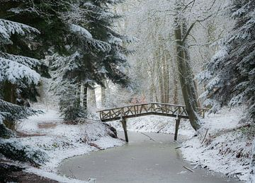 Winters tafereel in het bos