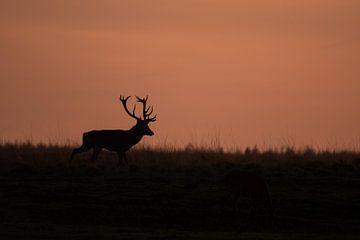 Deer at sunset van Menno Selles