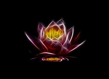 La fleur flamme van