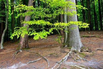 Meisje groen van Ostsee Bilder