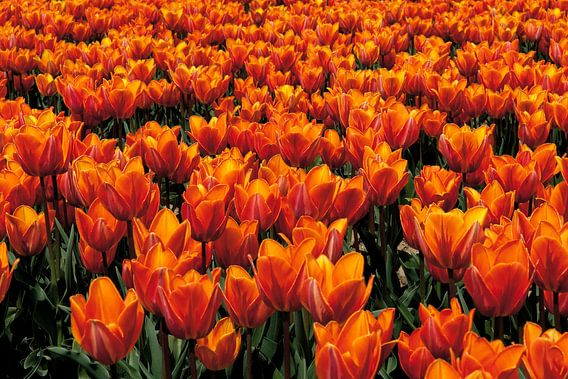 Orange Six