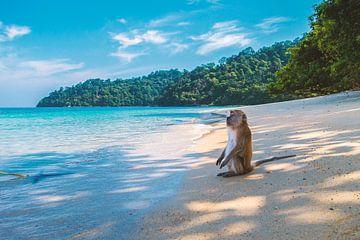 Affe genießt die Aussicht am Strand van