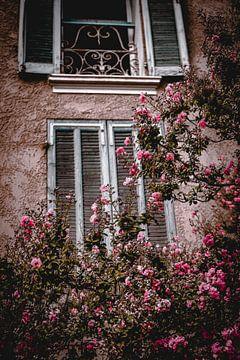 Rosa Blumen (Provence) von Daphne Groeneveld