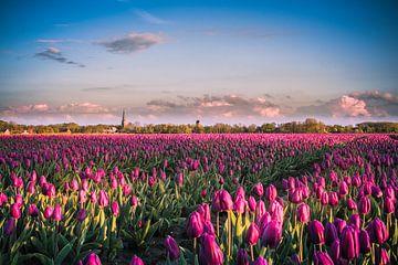 Tulpen uit het Noorden, Kleine Huisjes
