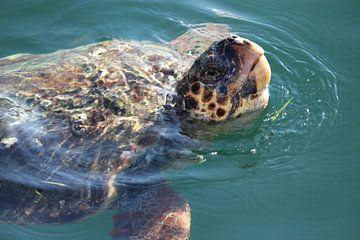 Kefalonische Schildkröte von Mark Veefkind