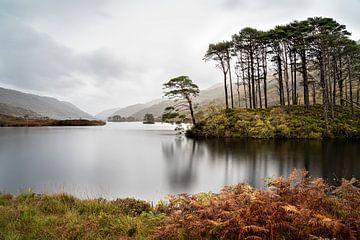 Eilean Na Moine (eilandje) Glencoe Schotland