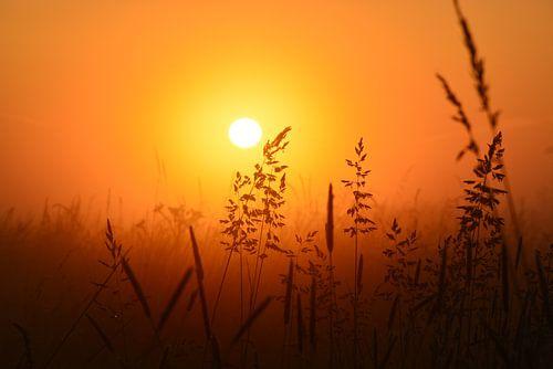 Weiland bij zonsopkomst van