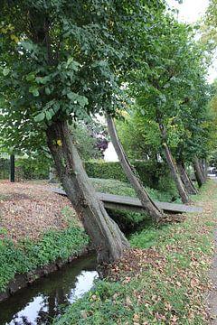 Bäume von Rieky Mooren