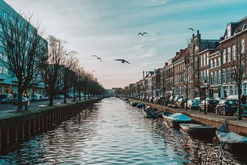 Duiven boven kanaal