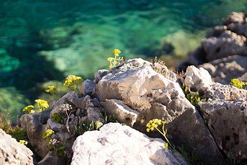 Begroeide rotsen