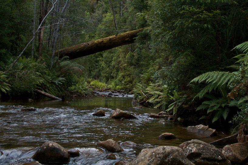 Stream in the rainforest  sur Arne Hendriks