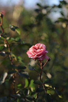 Roos von Jet Couzijn