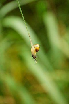 Die akrobatische Schnecke - Nahaufnahme von ViLa