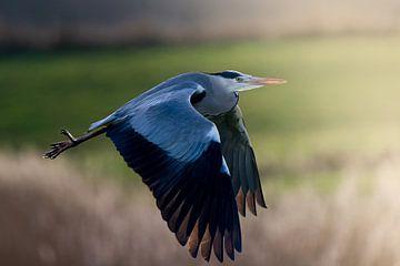 vliegende reiger van bryan van willigen
