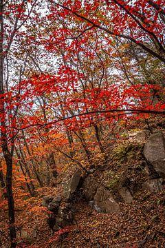 Herfst in de bossen van Bukhansan van Mickéle Godderis