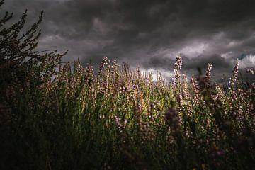 Blühendes violettes Heidekraut unter holländischem Wolkenhimmel von Fotografiecor .nl