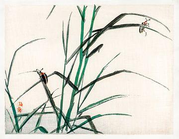 Käfer von Kōno Bairei (1844-1895). von Studio POPPY