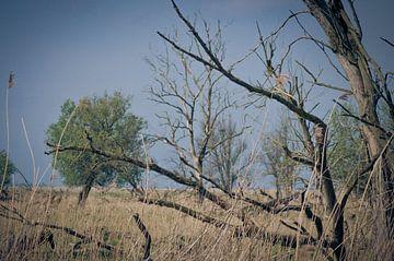 Wildernis natuur van Roel Van Cauwenberghe