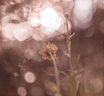 Blumen Teil 192 von Tania Perneel