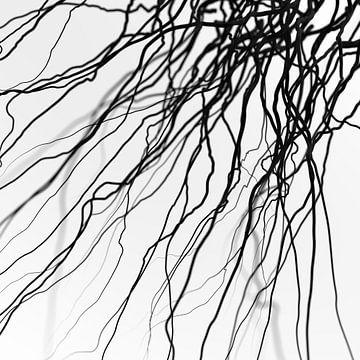 Schwarze Venen von Jörg Hausmann