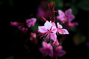 Pink Blume van