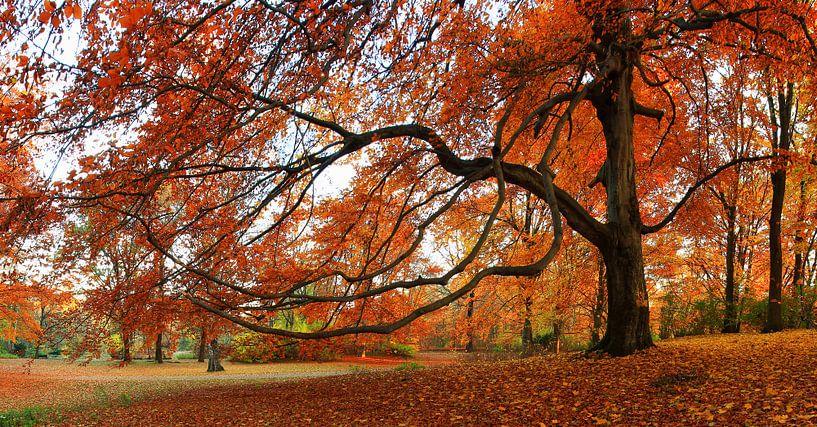 Herbstbaum von Frank Herrmann
