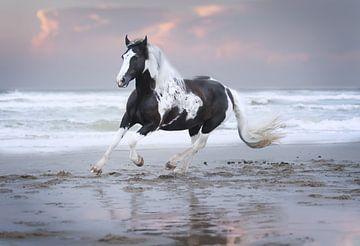 paard in galop op het strand van Kim van Beveren