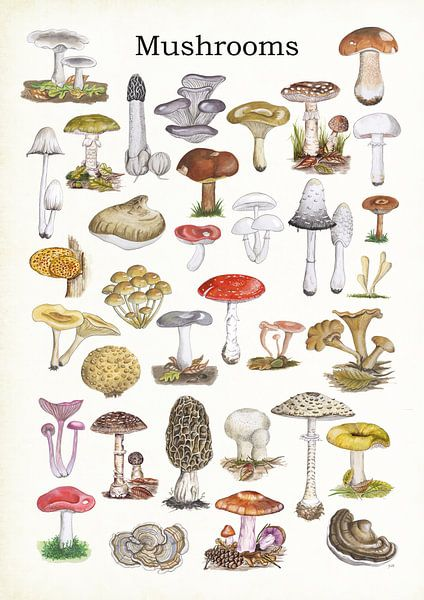 Mushrooms van Jasper de Ruiter