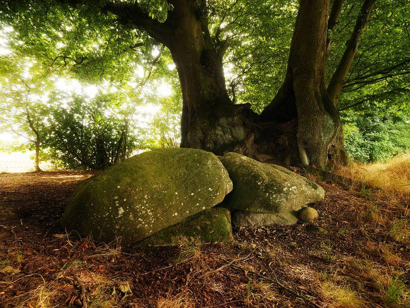 Old Tree with Stones van Jörg Hausmann