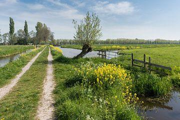 Stiltegebied in polders bij Hoornaar van Beeldbank Alblasserwaard