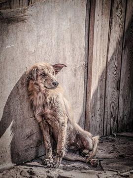 De hond van Geert van der Sanden