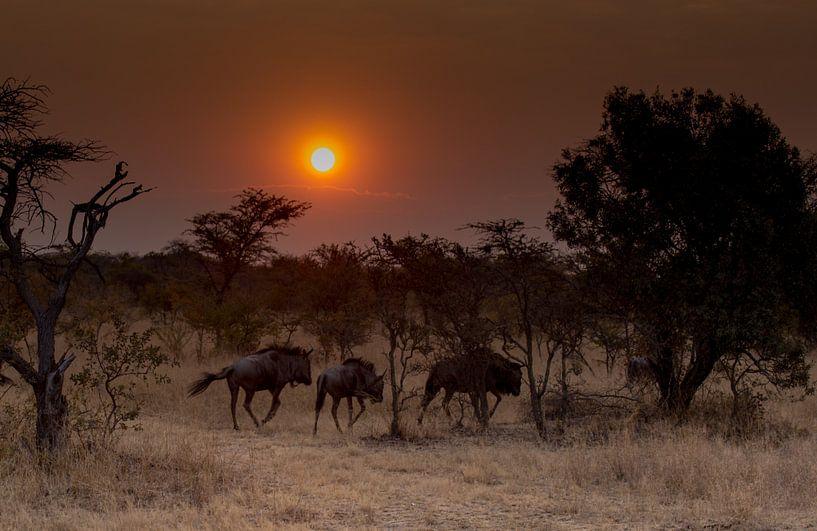 Wildebeests at Sunrise van Claudia van Zanten