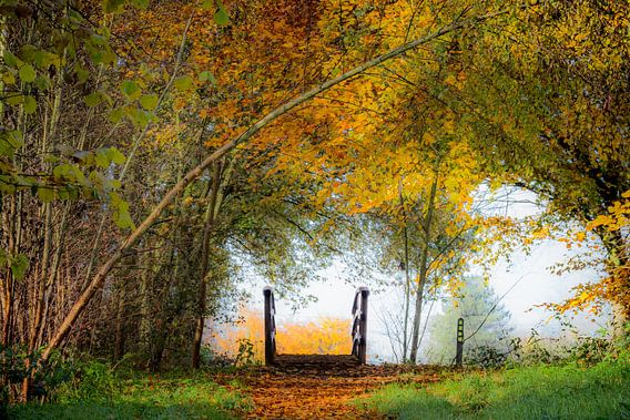 Bruggetje in een herfstlandschap (landscape) van Fotografie Jeronimo