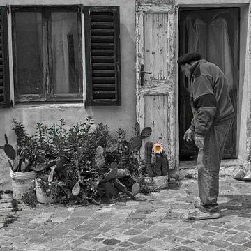 Oude man en cactusbloem van