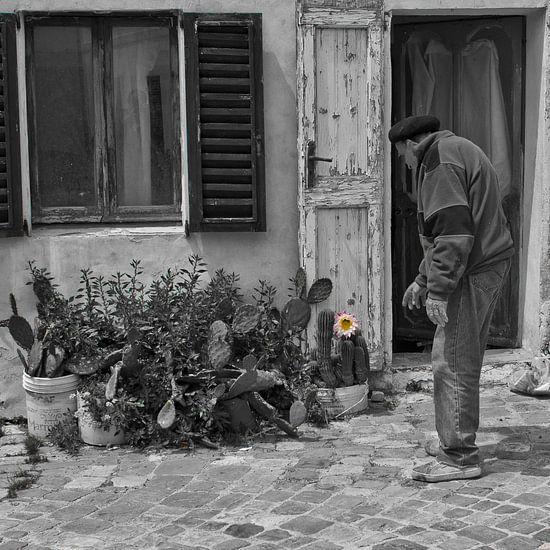 Oude man en cactusbloem