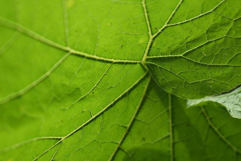 bladgroen van Linda Slingerland