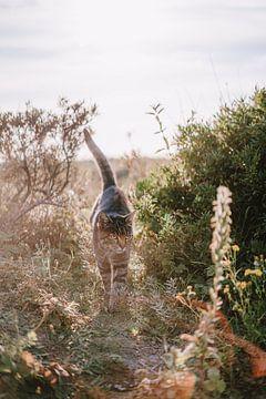 Laufende Katze von Anita Kranendonk