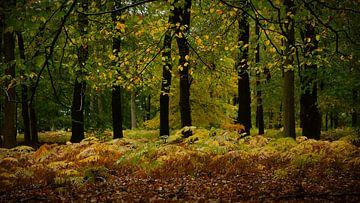Herbstliche Farben im Märchenwald von Sran Vld Fotografie