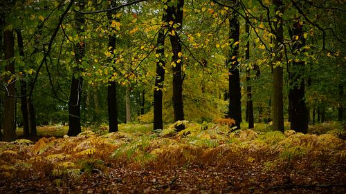 Herfstkleuren in het sprookjesbos