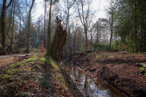 Beekje in het bos bij Eelde-Paterswolde