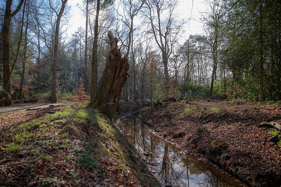 Ruisseau dans la forêt près d'Eelde-Paterswolde